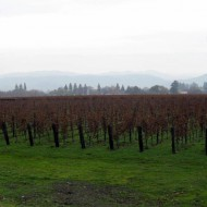 Napa Wineries Part II