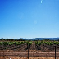 Napa Wineries Part I